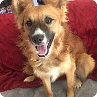 Adopt A Pet :: Bruno Adoption Pending Congrats Mason Family! - Halethorpe, MD