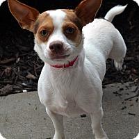 Adopt A Pet :: Slater - Bridgeton, MO