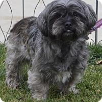 Adopt A Pet :: Curly - Las Vegas, NV