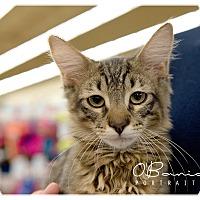 Adopt A Pet :: Felix - Baytown, TX