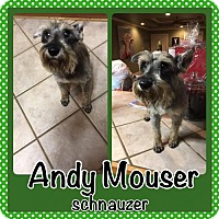 Adopt A Pet :: Andy Mouser - Bogalusa, LA