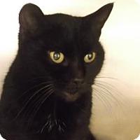 Adopt A Pet :: SYMI - Gloucester, VA