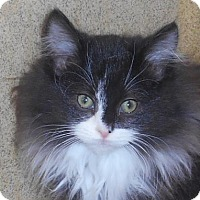 Adopt A Pet :: Lisa - Wooster, OH