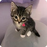 Adopt A Pet :: Joy - Whitehall, PA