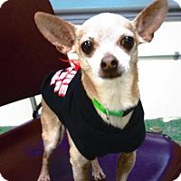 Adopt A Pet :: Tiko - Aurora, IL