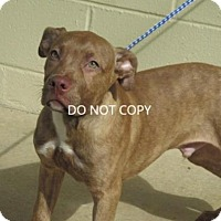 Adopt A Pet :: Butch - Rocky Mount, NC