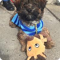Adopt A Pet :: Henry - Trenton, NJ