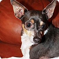 Adopt A Pet :: Bella - Vidor, TX
