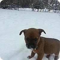 Adopt A Pet :: Margie - Silver Lake, WI