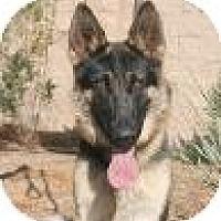Adopt A Pet :: Freddie - Canoga Park, CA