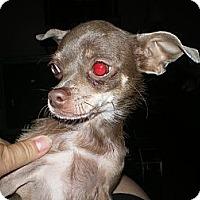 Adopt A Pet :: Luvalee - Apex, NC