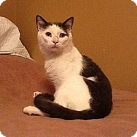 Adopt A Pet :: Fred - Wakinsville, GA