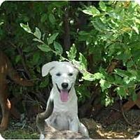 Adopt A Pet :: Bree - Glastonbury, CT
