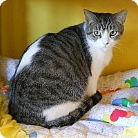 Adopt A Pet :: Sapphire - Mobile, AL