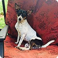 Adopt A Pet :: Louise - Nanuet, NY