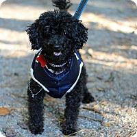 Adopt A Pet :: Snyder - Tinton Falls, NJ