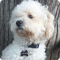 Adopt A Pet :: Noodles - Mission Viejo, CA