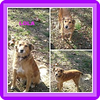 Adopt A Pet :: LOLA - Malvern, AR