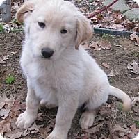 Adopt A Pet :: Sundance - Bedminster, NJ