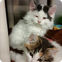 Adopt A Pet :: Kendrick - Chippewa Falls, WI