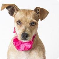 Adopt A Pet :: *CANDY - Sacramento, CA