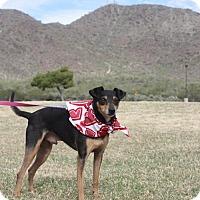 Adopt A Pet :: Chicharito - Phoenix, AZ