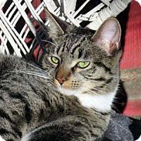 Adopt A Pet :: Hoot Hoot - Tiburon, CA