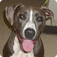 Adopt A Pet :: Stella - Gulfport, MS