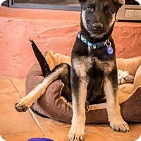 Adopt A Pet :: York - Phoenix, AZ