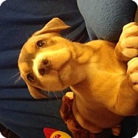 Adopt A Pet :: Butch - Foristell, MO