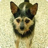 Adopt A Pet :: Kreacher - Bradenton, FL