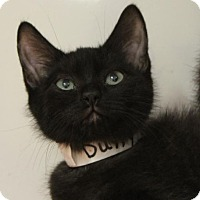 Adopt A Pet :: DUFFY: Low Fees, neutered - Red Bluff, CA