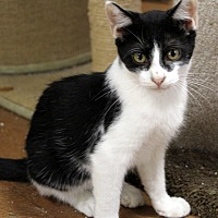 Adopt A Pet :: Oreo - north myrtle beach, SC