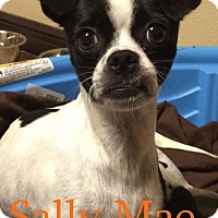 Adopt A Pet :: Sally Mae - Shreveport, LA