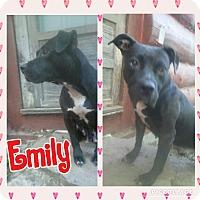 Adopt A Pet :: Emily - Cranston, RI