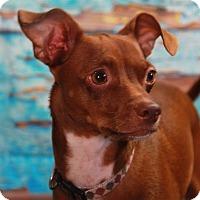 Adopt A Pet :: Marco - Warner Robins, GA