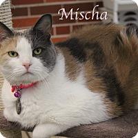 Adopt A Pet :: Mischa - Bradenton, FL