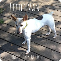 Adopt A Pet :: Little Man - Milton, GA