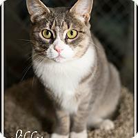 Adopt A Pet :: Libby - Fallbrook, CA
