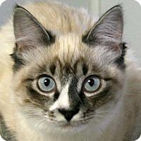 Adopt A Pet :: Rosie VALENTINE'S SPECIAL! 50% - Republic, WA