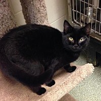 Adopt A Pet :: Kora - Anderson, IN