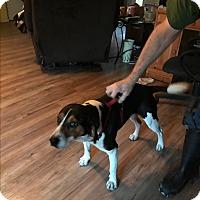 Adopt A Pet :: Dude - Hohenwald, TN