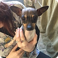 Adopt A Pet :: Kate - Cedaredge, CO