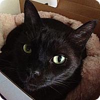 Adopt A Pet :: Thunder - Byron Center, MI