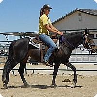 Adopt A Pet :: Dreamer - Phelan, CA