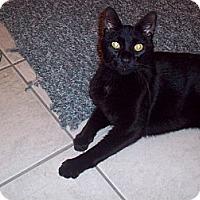 Adopt A Pet :: Simba - Xenia, OH