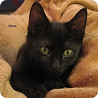 Adopt A Pet :: Olive - Portland, OR
