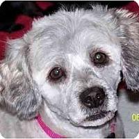 Adopt A Pet :: Crystal-NY - Mays Landing, NJ
