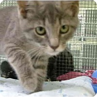 Adopt A Pet :: Fifi - Winter Haven, FL