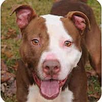 Adopt A Pet :: Hoss - Chicago, IL